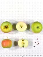Antonovka Apple